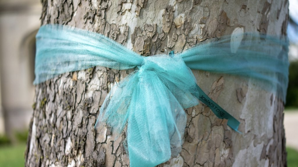 image of a blue ribbon tied around a tree