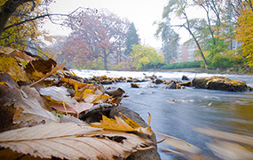 close up photo of a flowing river with leaves