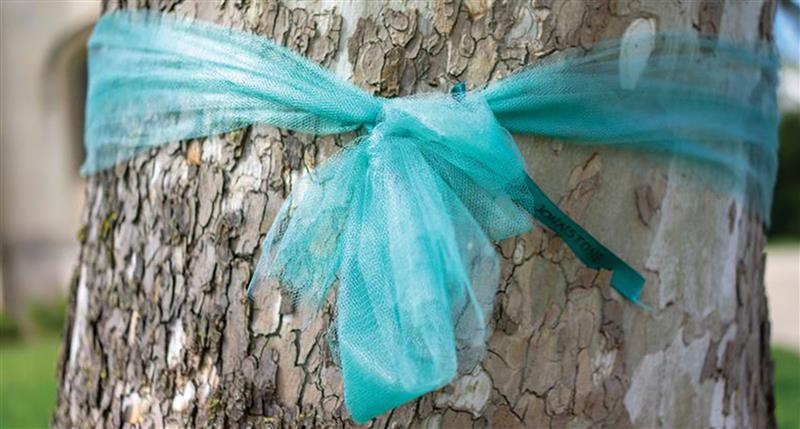 Tree trunk with teal ribbon wrapped around it