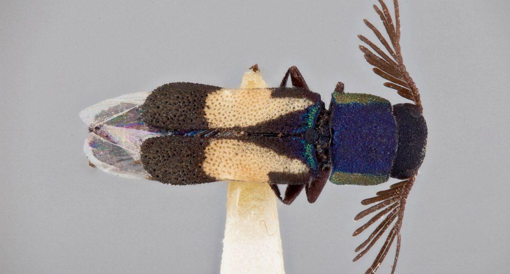 close-up image of a shiny green and bronze beetle-like bug