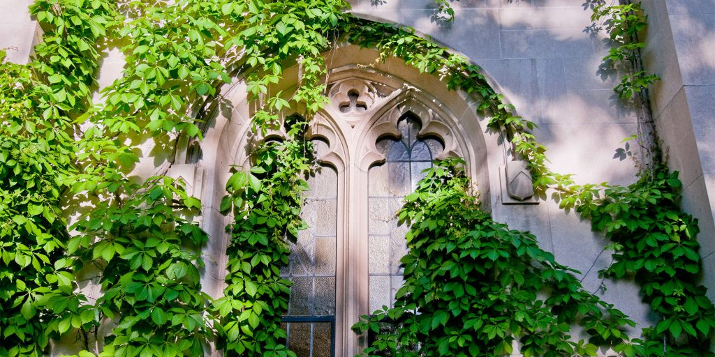 old style window with vines growing over it