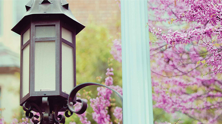 a lamp post with purple flowers around it