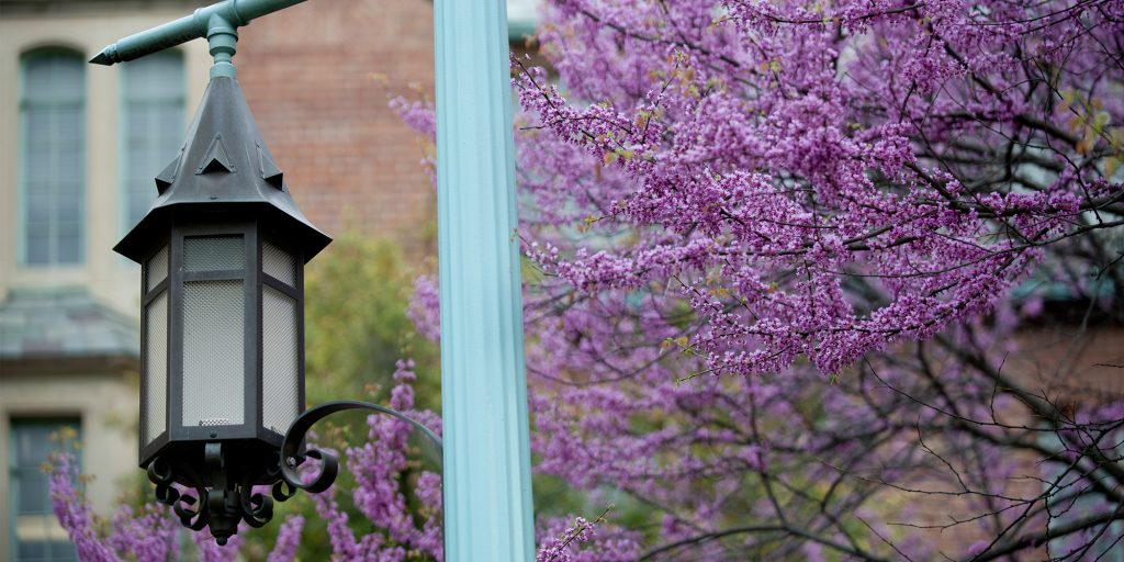 lantern surrounded by trees with purple flowers