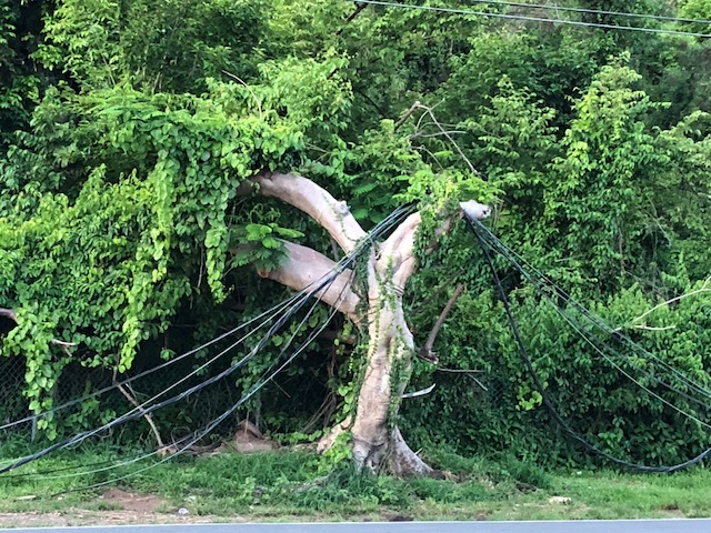 a broken tree with a telephone wire hanging from its branches